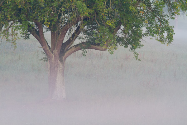 20110903_Bodennebel_Streuobst_003